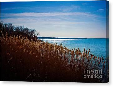 Winter Breeze Canvas Print by Lisa Holmgreen