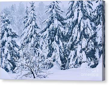 Winter Coat Canvas Print by Aimelle