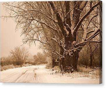 Winter Country Road Canvas Print by Carol Groenen
