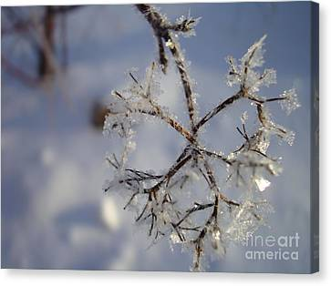 Canvas Print featuring the painting Winter Crystals by Susan Fisher