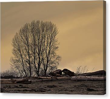 Botanical Beach Canvas Print - Winter Day At The Beach by Marion McCristall