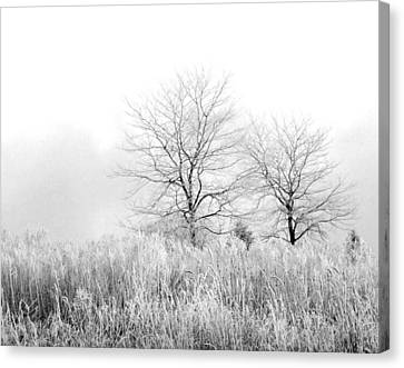 Winter Day Canvas Print by Julie Palencia
