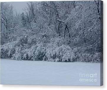 Winter Delight Canvas Print by Cedric Hampton