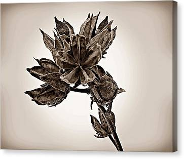 Winter Dormant Rose Of Sharon - S Canvas Print by David Dehner