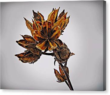 Canvas Print featuring the photograph Winter Dormant Rose Of Sharon by David Dehner