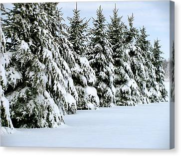 Winter Elegance Canvas Print