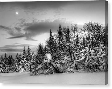 Winter Evening Canvas Print by Michele Cornelius