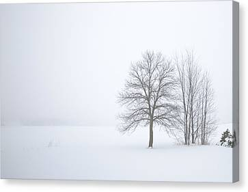 Winter Fog And Trees Canvas Print