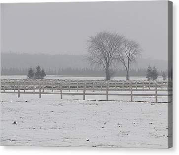Winter Fog On The Paddocks Canvas Print