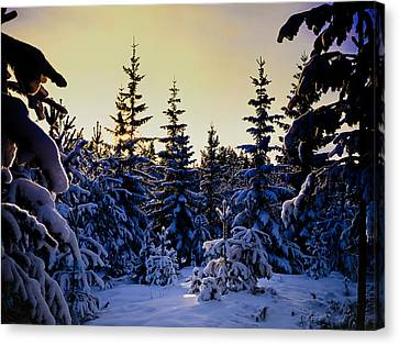 Winter Forest Canvas Print by Hakon Soreide