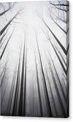 Winter Forest In Mist Canvas Print