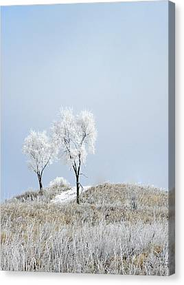 Winter Frost Canvas Print by Julie Palencia