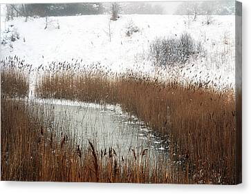 Winter Gold Canvas Print by Terence Davis