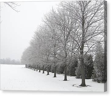 Canvas Print featuring the mixed media Winter Hoar Frost On Trees by Bruce Ritchie
