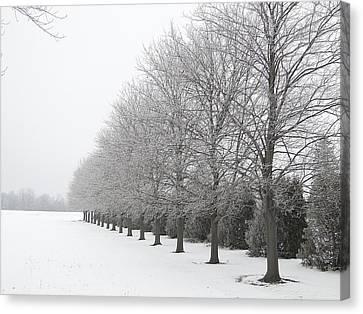 Winter Hoar Frost On Trees Canvas Print