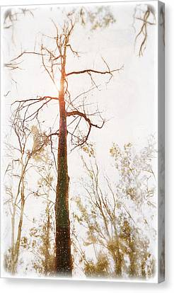 Winter In The Woodlands Canvas Print by Erica Horsley