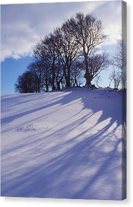 Winter Landscape Canvas Print by The Irish Image Collection