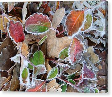 Winter Leaves Canvas Print by Linda Pope