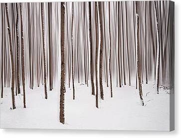 Winter Canvas Print by Mircea Costina Photography