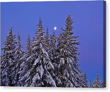 Winter Night Canvas Print by Michele Cornelius