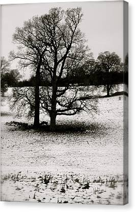 Canvas Print featuring the photograph Winter Oaks by John Colley