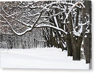 Winter Park With Snow Covered Trees Canvas Print by Elena Elisseeva