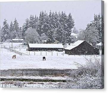 Sean Horse Canvas Print - Winter Pasture by Sean Griffin