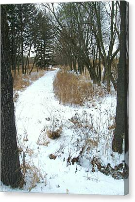 Winter Path Canvas Print by Todd Sherlock
