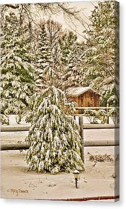 Canvas Print featuring the photograph Winter Pine by Mary Timman