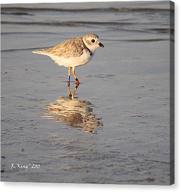 Winter Piping Plover Banded 2 Canvas Print by Roena King