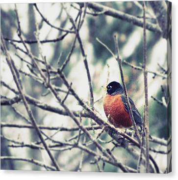 Canvas Print featuring the photograph Winter Robin by Robin Dickinson