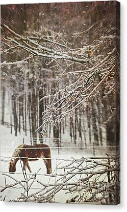 Winter Scene With Horse Grazing In Wooded Pasture Canvas Print by Sandra Cunningham