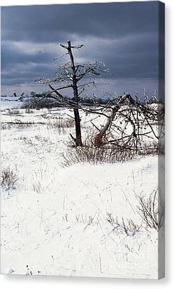 Winter Shenandoah National Park Canvas Print by Thomas R Fletcher