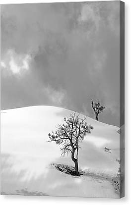 Winter Solitude Canvas Print by Viktor Savchenko
