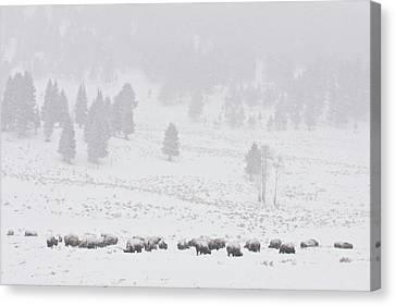 Winter Storm Canvas Print by D Robert Franz