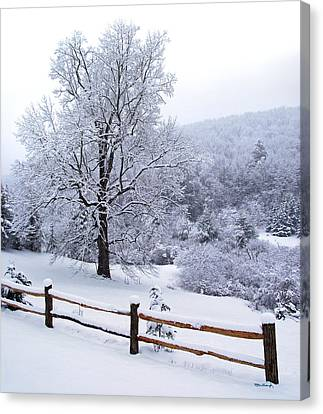 Winter Tree And Fence In The Valley Canvas Print