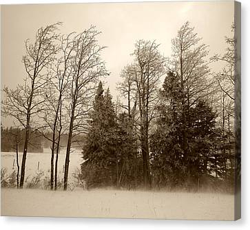 Canvas Print featuring the photograph Winter Treeline by Hugh Smith