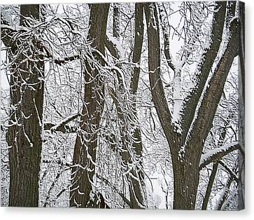 Winter Trees  Canvas Print by Aimee L Maher Photography and Art Visit ALMGallerydotcom