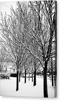 Winter Trees Canvas Print by Chris Barber