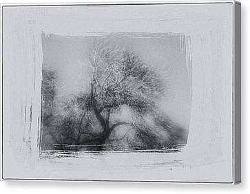 Winter Trees Canvas Print by David Ridley