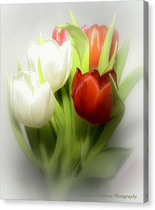 Winter Tulips Canvas Print by Laura DAddona