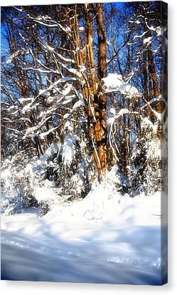 Winter Wanderland Canvas Print by Michael Putnam