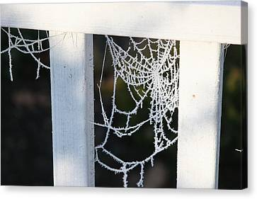 Winter Web Number Two Canvas Print