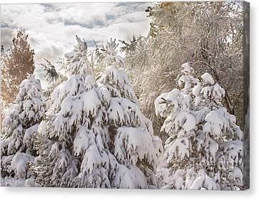 Winter Wonderland Canvas Print by James BO  Insogna