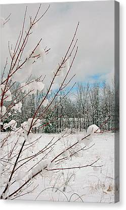Winter Woods Canvas Print by Joann Vitali
