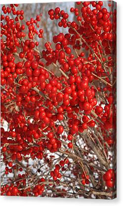 Winterberries Canvas Print by Michael Flood