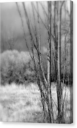 Canvas Print featuring the photograph Winters Branch by Kathleen Grace