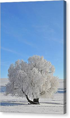 Winter's Coat In Montana's Gallatin Valley Canvas Print by Bruce Gourley