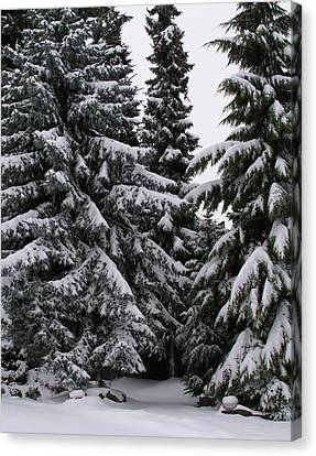 Winters Silence Canvas Print