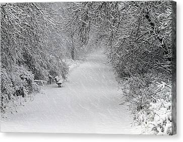 Canvas Print featuring the photograph Winter's Trail by Elizabeth Winter